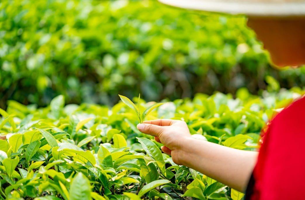 CIC Agribusiness наращивает производство органических удобрений